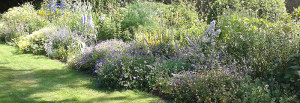 Plant and Border Maintenance Planting Partners services